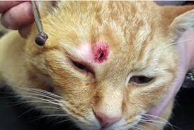 Pet Corner | Vets In South East Report Shocking Rise In Air Gun Attacks On Cats