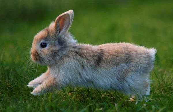 Pet Corner | Rabbit Haemorrhagic Disease – are your rabbits protected? | Romsey & Villages