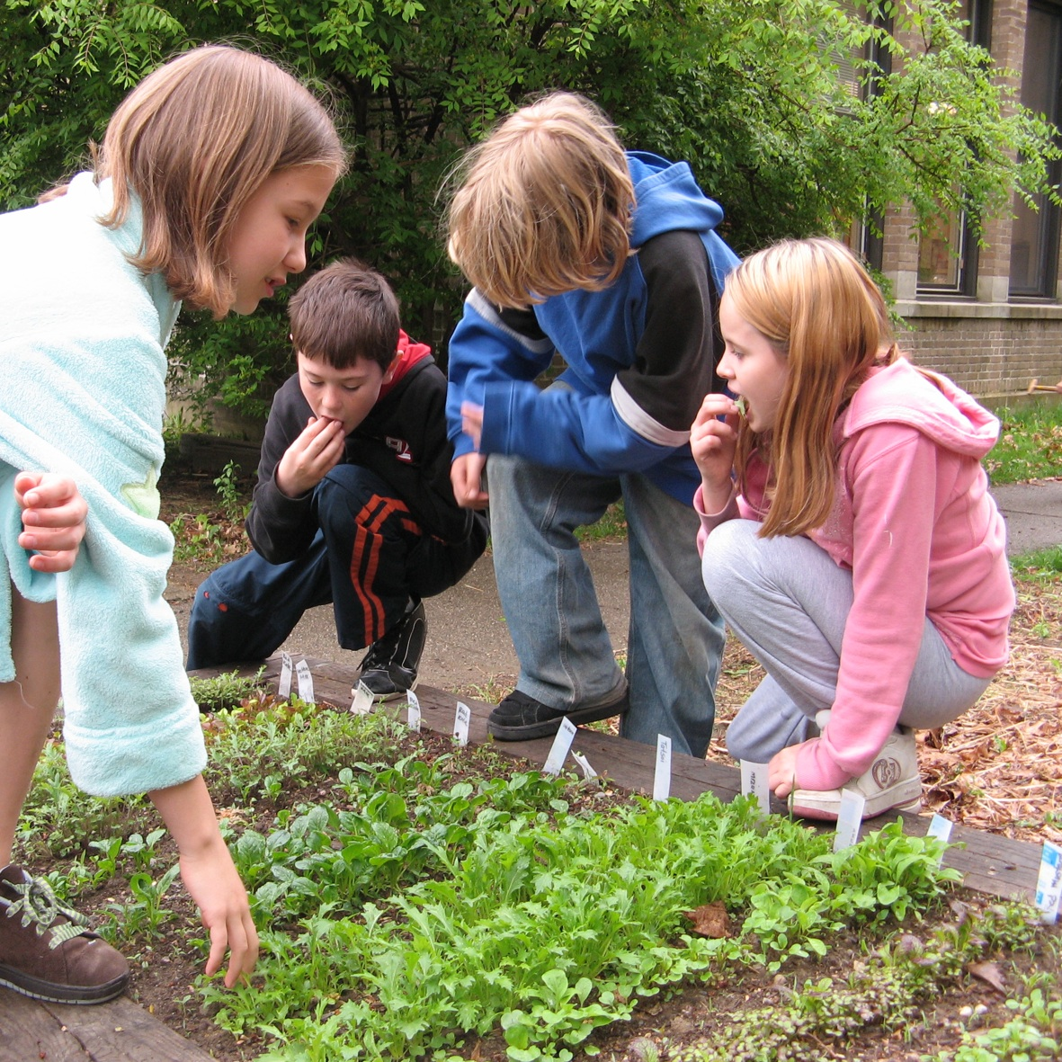 Education News | Schools in the South East of England are Sowing and Growing for a Healthier Future | Andover & Villages