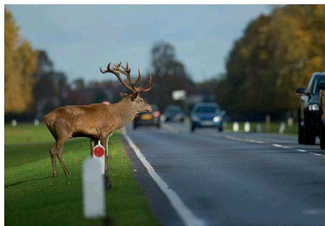 Motor News | A303 Biggest Deathtrap for Wildlife | Andover & Villages