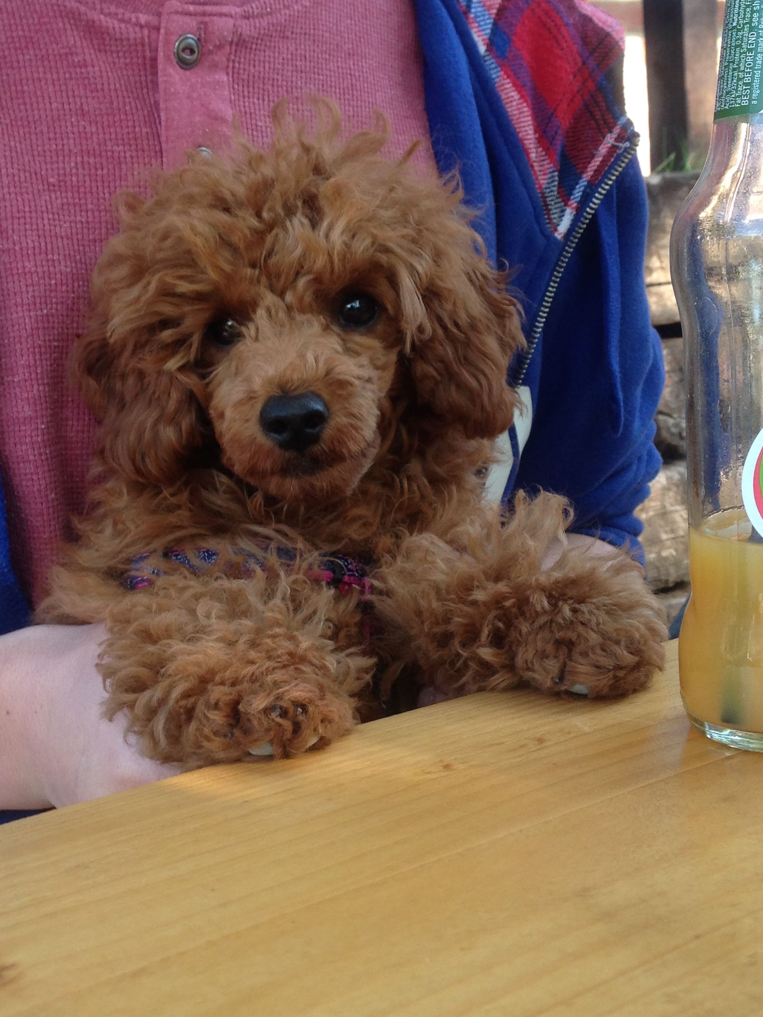 Dog friendly Pubs, Tea Rooms and Restaurants