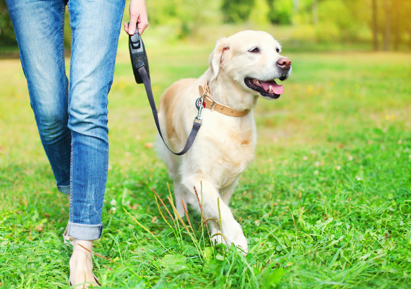 Pet News | Celebrate National Walking month with your Dog | Andover & Villages