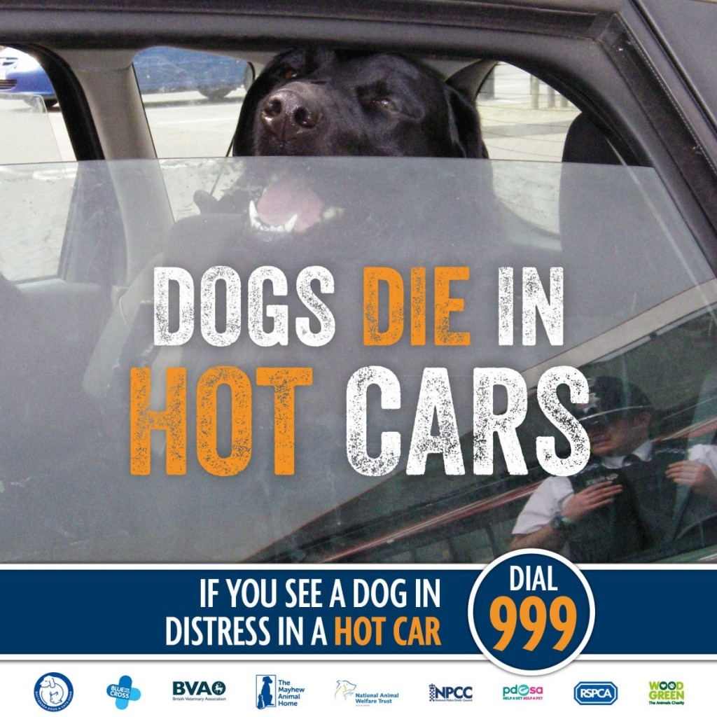 Pet News | Dogs Die in Hot Cars Warning | Andover & Villages