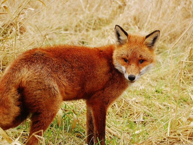 Local Politics | Kit Malthouse Puts the Record Straight on the Fox Hunting Vote