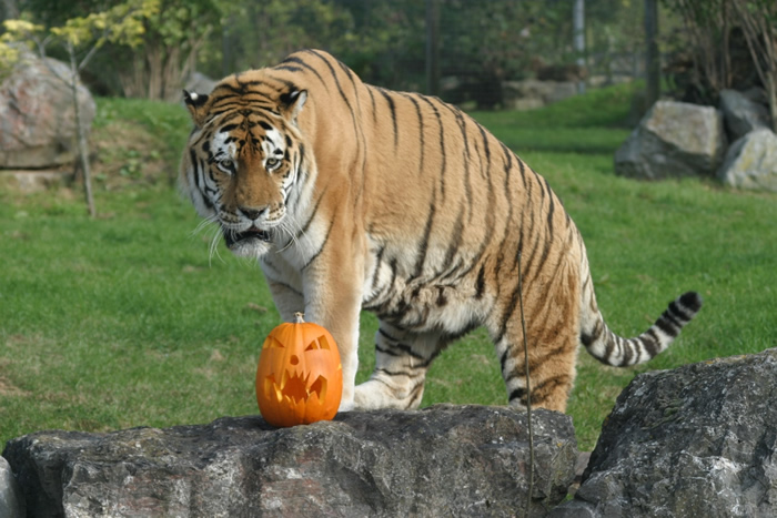 Win Tickets to Marwell Zoo with Andover & Villages