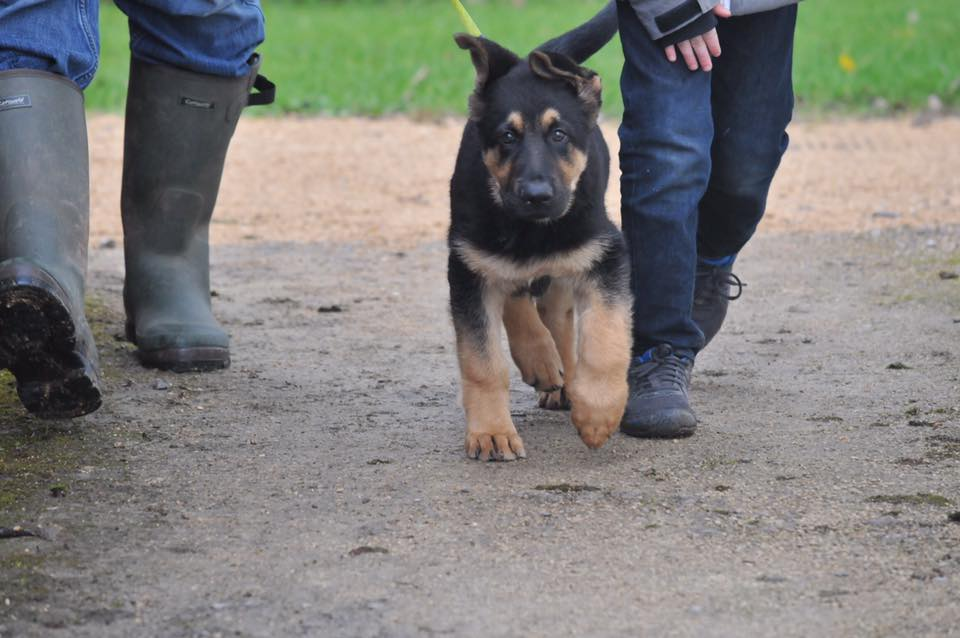 Pet News | Help Train Police Dogs of the Future | Andover & Villages