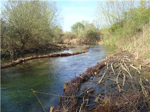 Local News | River Anton restoration work continues