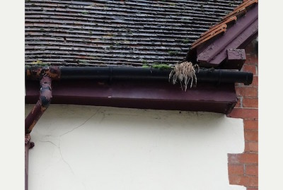 Neglecting Your Gutters is Pouring Money Down the Drain