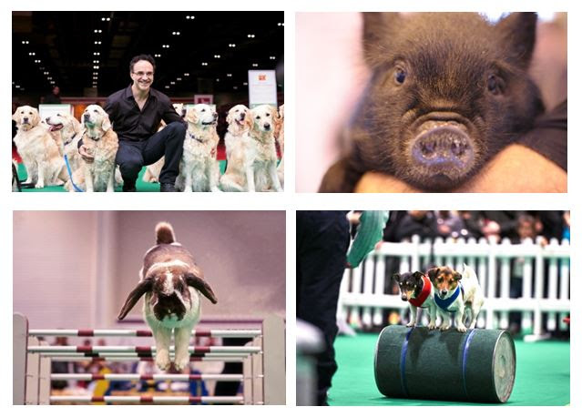 Nation's Favourite Pet Show Returns to ExCeL London