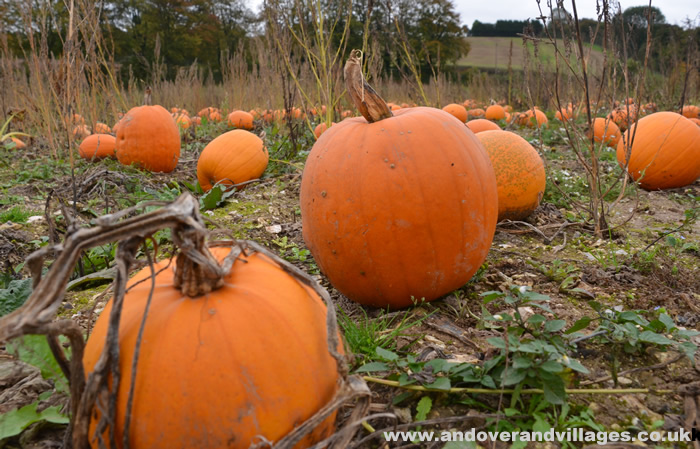 Pick a Pumpkin at Bourne Valley Pick Your Own!