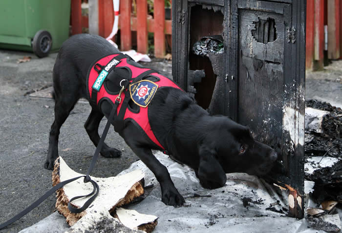 Local News | Hampshire Fire Rescue Dogs Hang up Their Boots