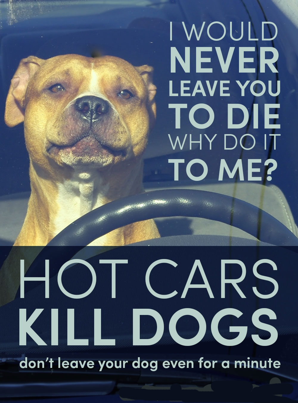 Pet News | Dogs Die in Hot Cars - No Excuses | Andover & Villages