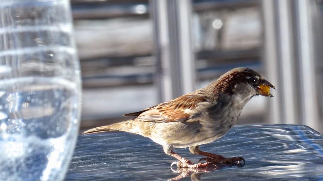 Romsey Homes & Gardens | Brits Embracing 'Urban Birding' | Romsey & Villages