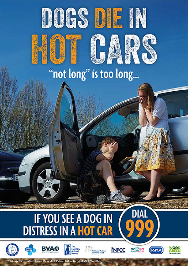 andover pet news | dogs die in hot cars | Andover & villages