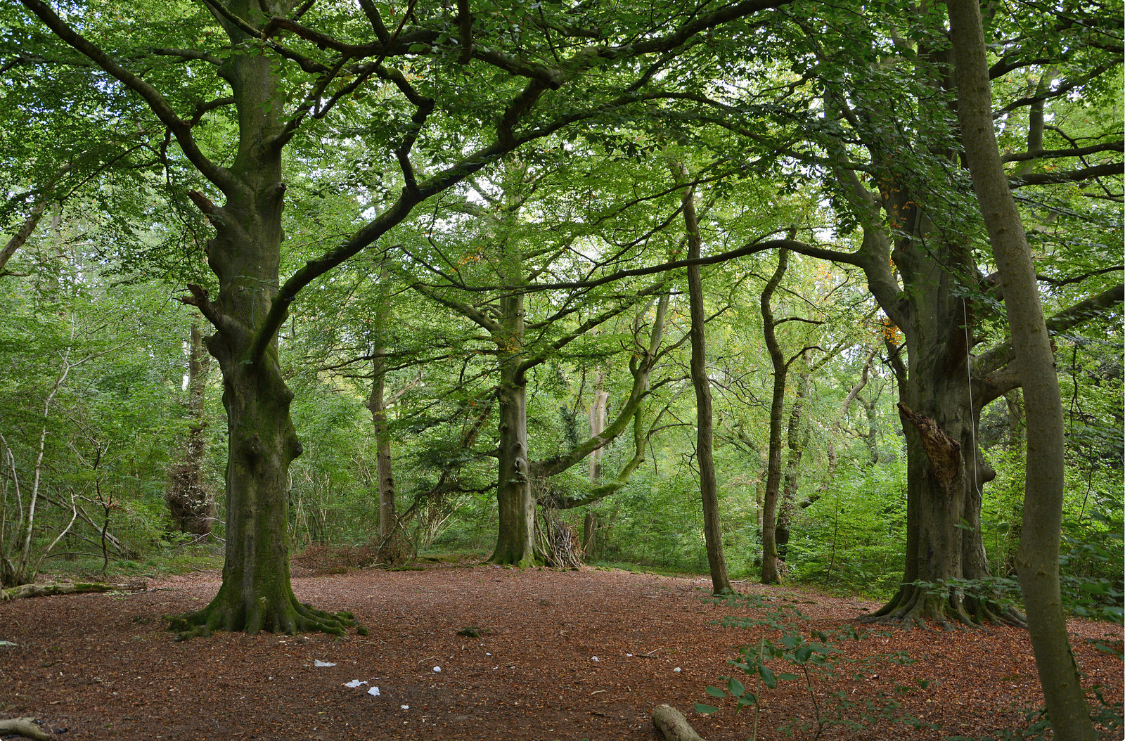 Andover News | Enjoy Hampshire's countryside? Come and have your say