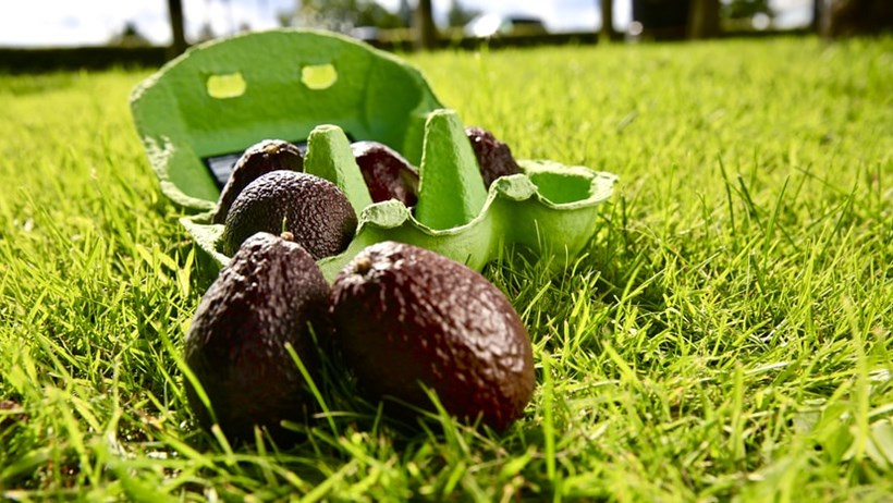 Andover food news | Tesco Tackles Food Waste with Miniature Avocados