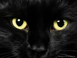 Pet News | Cat Charity Uncovers A Spooky Contradiction In Attitudes To Black Cats | Andover & Villages