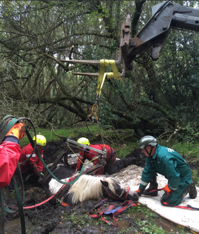 Hampshire Firefighters Rescue Mary the Mare