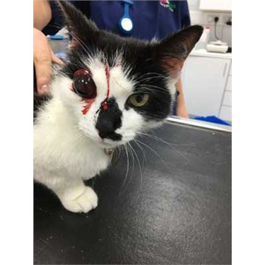 Government consultation prompts cat charity call for air gun licensing