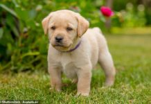 Tips for How to Housetraining Your Puppy
