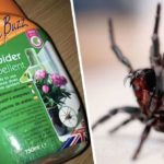 Home bargains spider repellent